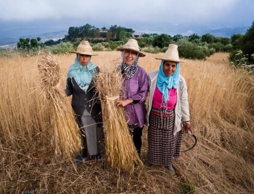 La rete Slow Grains accoglie chi studia, coltiva, trasforma e promuove le varietà autoctone di grano